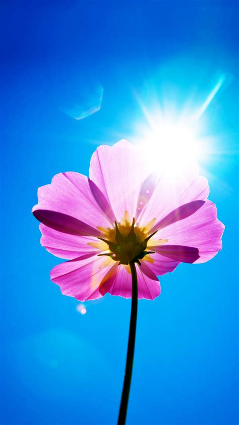 Wallpaper Purple flower, Sunny day, Stock, Android, HD
