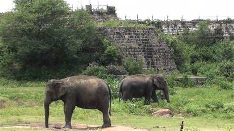 Nehru Zoological Park mcl