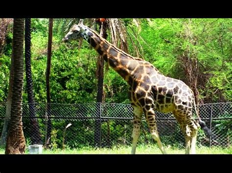 NEHRU ZOO HYDERABAD - HD Video - Complete Coverage - YouTube