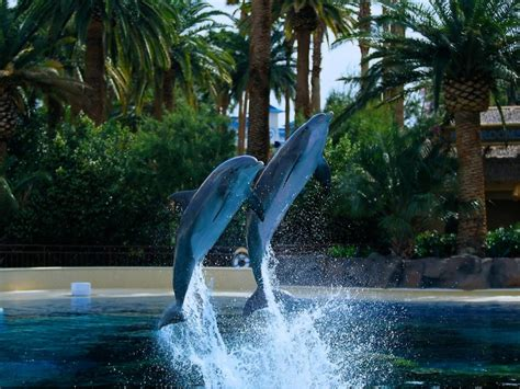 Dolphin Wallpapers, Pictures, Images