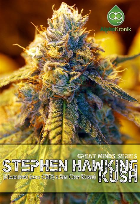 Stephen Hawking Kush Regular Seeds - Cannabis & Marijuana